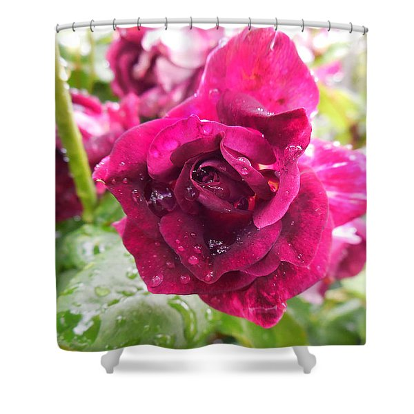 Wet Rose Shower Curtain