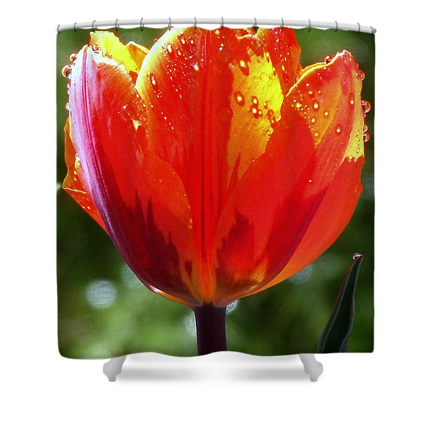 Wet Tulip Shower Curtain