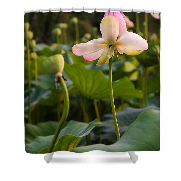 Wetland Flowers Shower Curtain