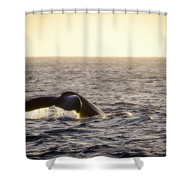Whale Fluke Shower Curtain
