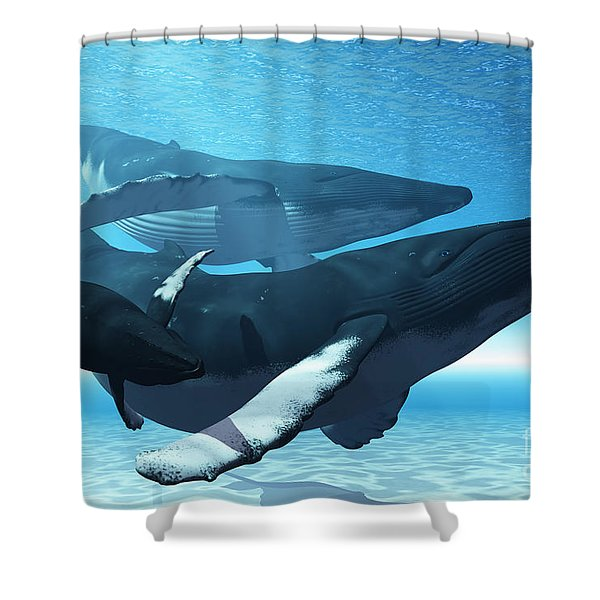 Whale Play Shower Curtain