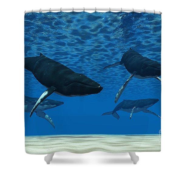 Whale Swim Shower Curtain