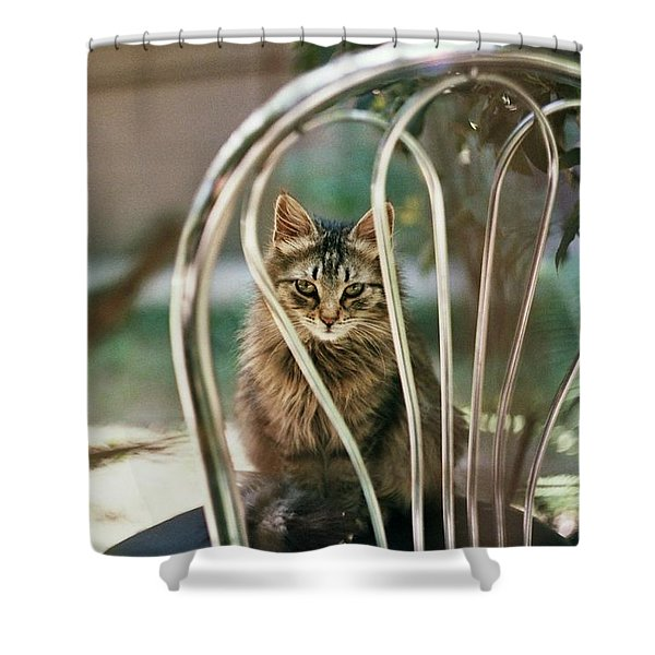 What Does This Cat Know About Us?  Shower Curtain