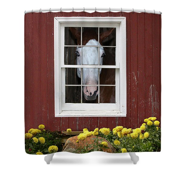 What's Out There? Shower Curtain