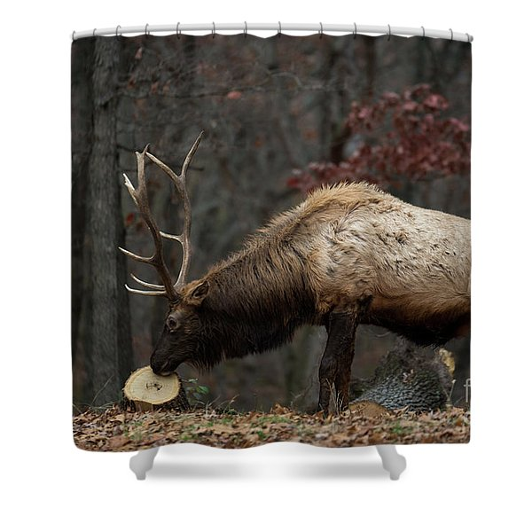 Shower Curtain featuring the photograph What's This? by Andrea Silies