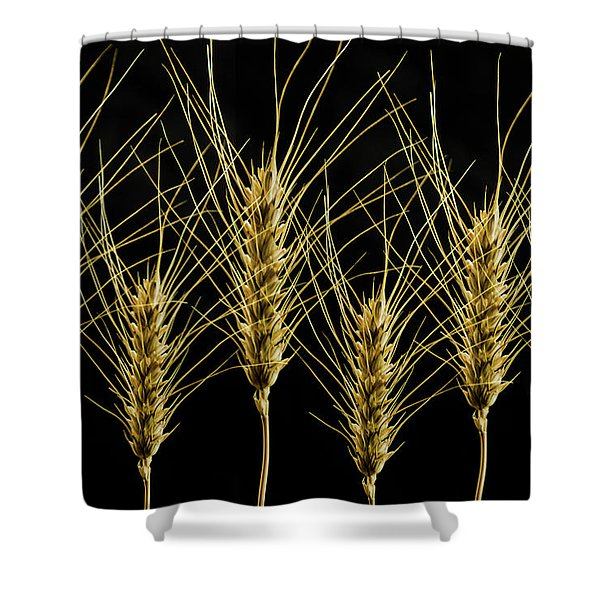 Wheat In A Row Shower Curtain