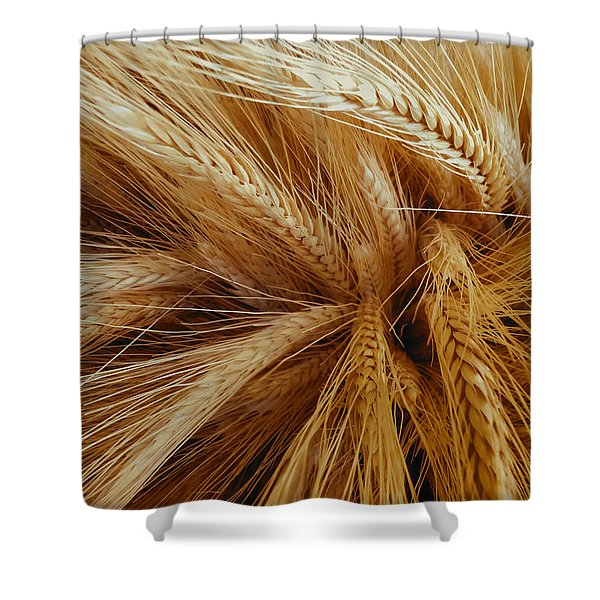 Wheat In The Sunset Shower Curtain