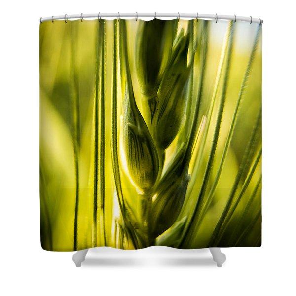 Wheat Shower Curtain