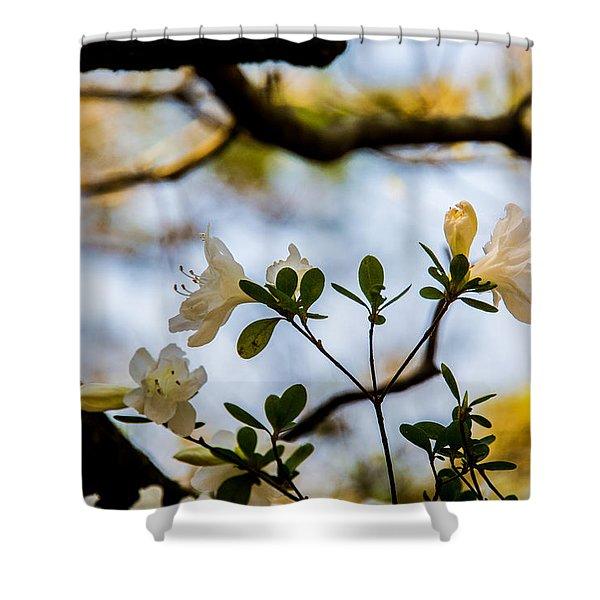 Whie Azaleas Under A Dogwood Tree Shower Curtain