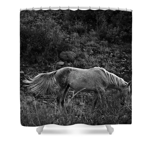 Shower Curtain featuring the photograph White 47 by Catherine Sobredo