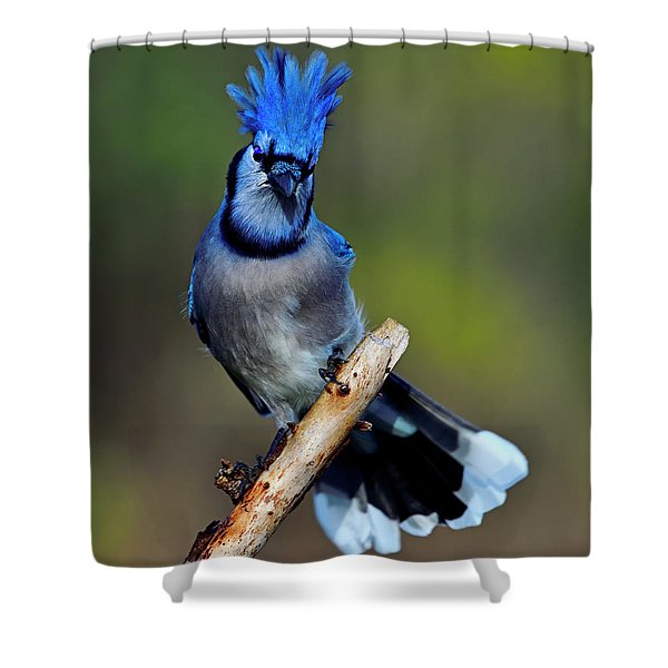 White And Blue Tips Shower Curtain