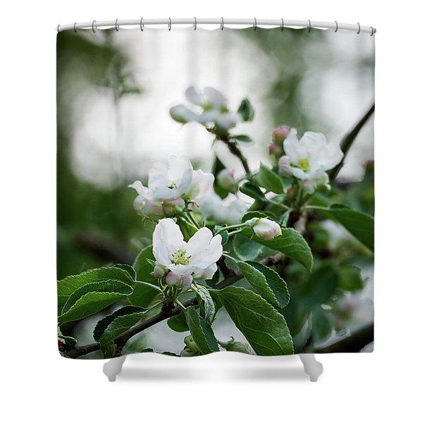 White Apple Shower Curtain