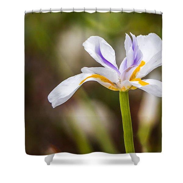 White Beardless Iris Shower Curtain