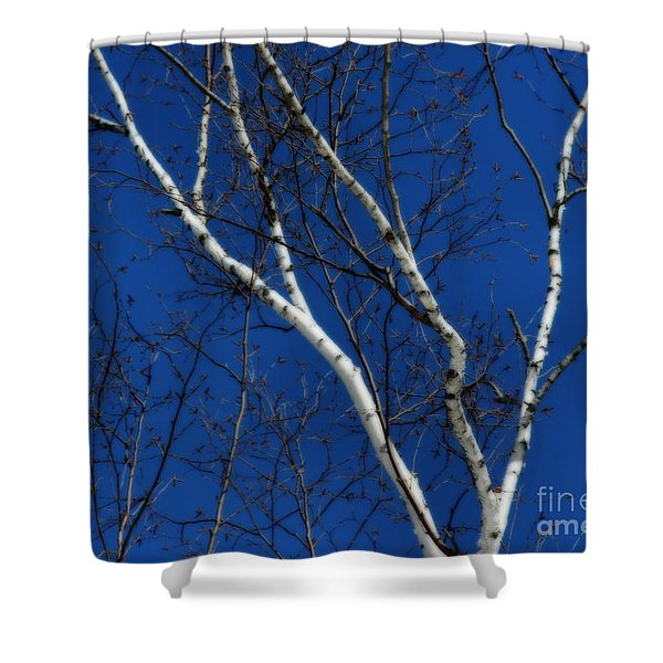 White Birch Blue Sky Shower Curtain