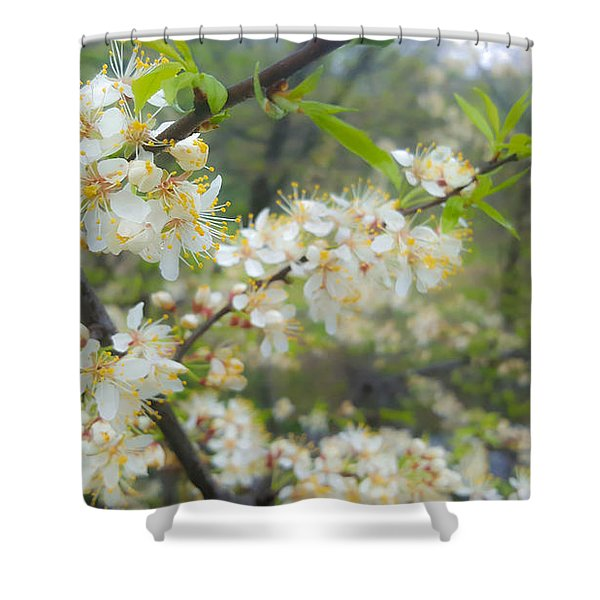 White Blossoms On Fruit Tree Shower Curtain