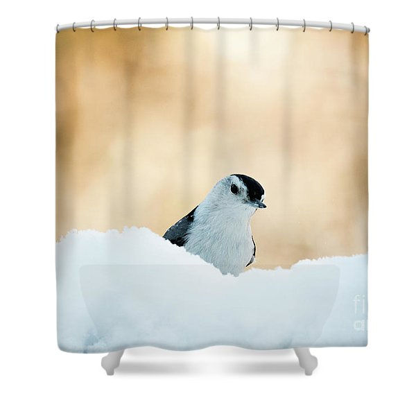 White Breasted Nuthatch In Snow Shower Curtain