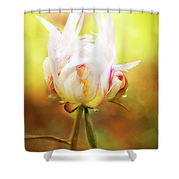 White Chinese Peony Laden With Raindrops Shower Curtain