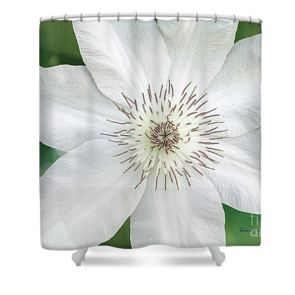 Shower Curtain featuring the photograph White Clematis Flower Garden 50121 by Ricardos Creations