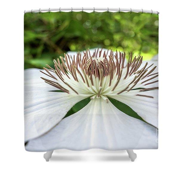 White Clematis Flower Garden 50146 Shower Curtain