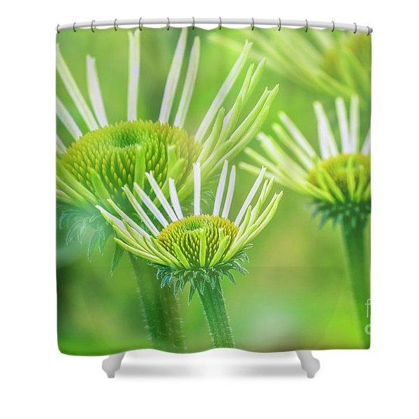 White  Coneflower II Shower Curtain