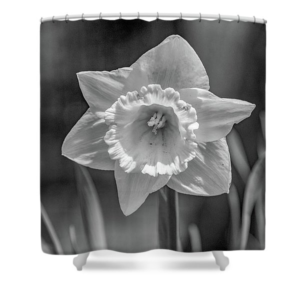 White Daffodil  Shower Curtain