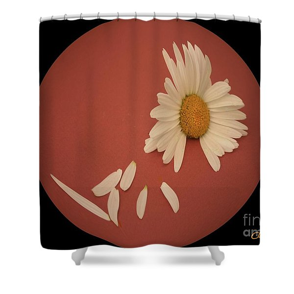 Encapsulated Daisy With Dropping Petals Shower Curtain