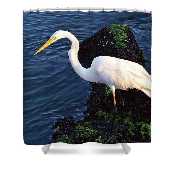 White Egret At Sunrise - Barnegat Bay Nj  Shower Curtain
