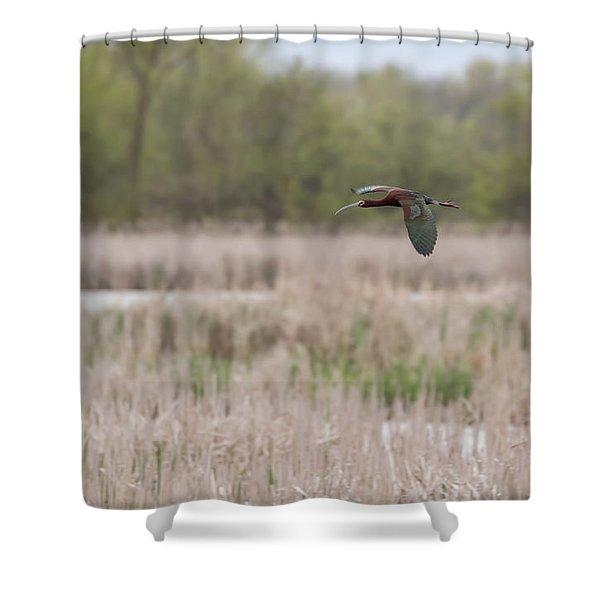 White-faced Ibis 2017-3 Shower Curtain