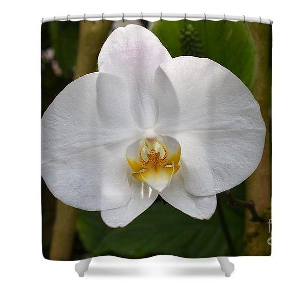 Phalaenopsis Sanderiana Shower Curtain
