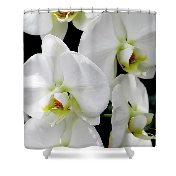 White Orchid Shower Curtain