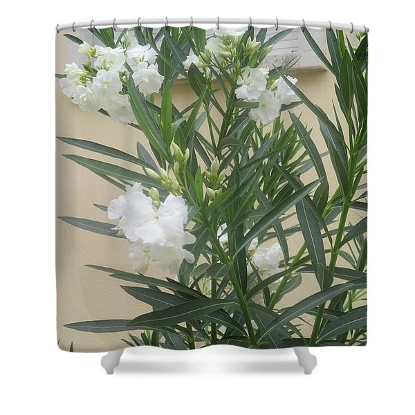 White Flowers With A Closed Window Behind Shower Curtain