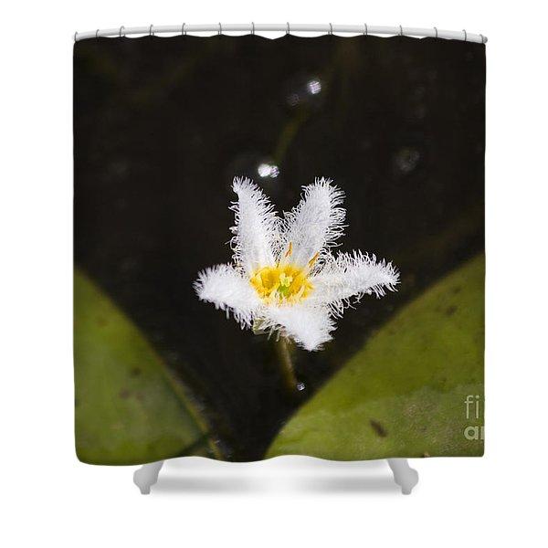 White Fringe Lily Shower Curtain