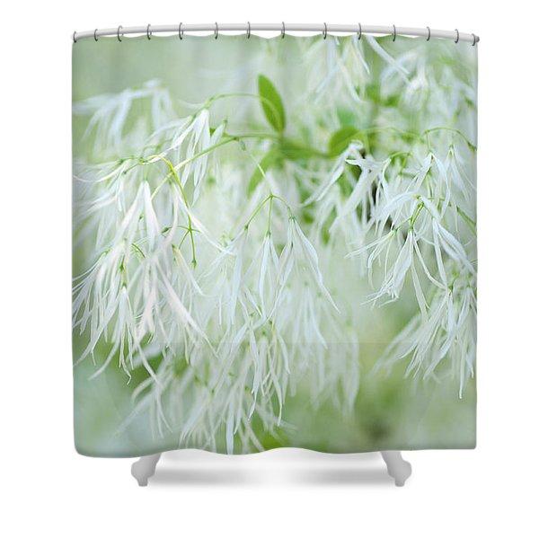 White Fringetree Shower Curtain