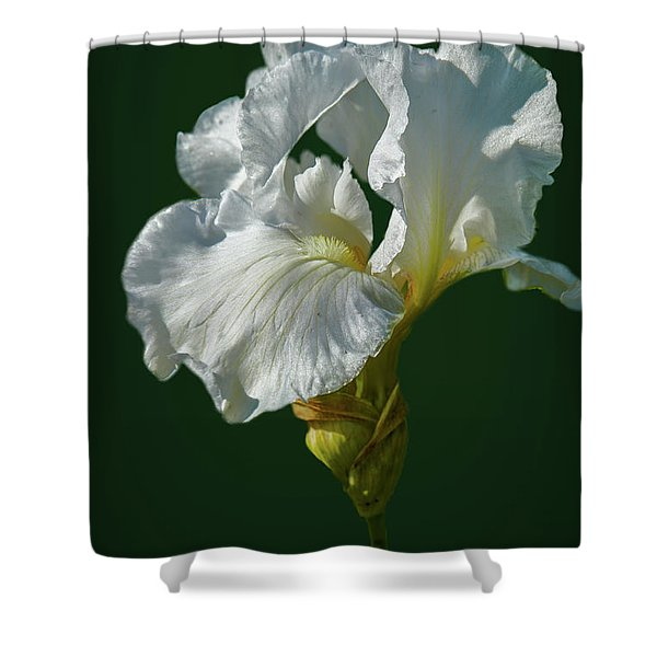 White Iris On Dark Green #g0 Shower Curtain