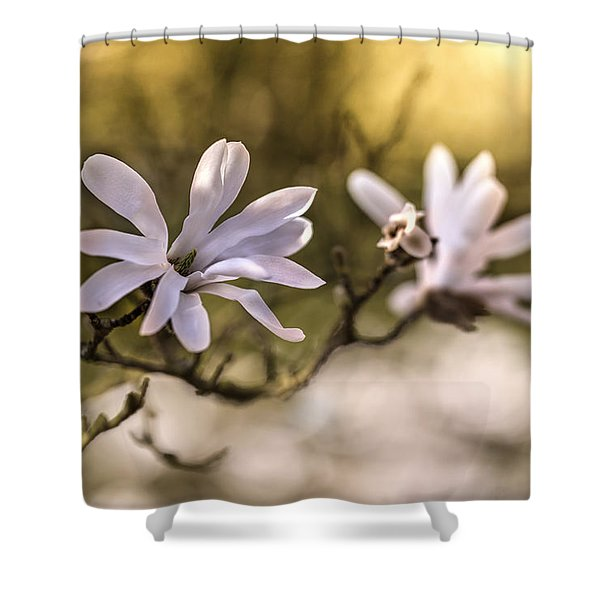 Shower Curtain featuring the photograph White Magnolia by Jaroslaw Blaminsky