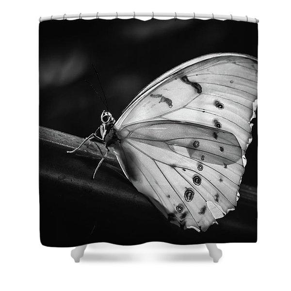 White Morpho Black And White Shower Curtain