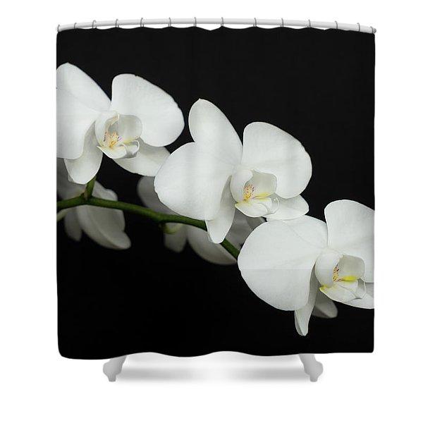 White On Black Shower Curtain