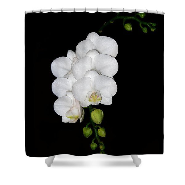 White Orchids On Black Shower Curtain
