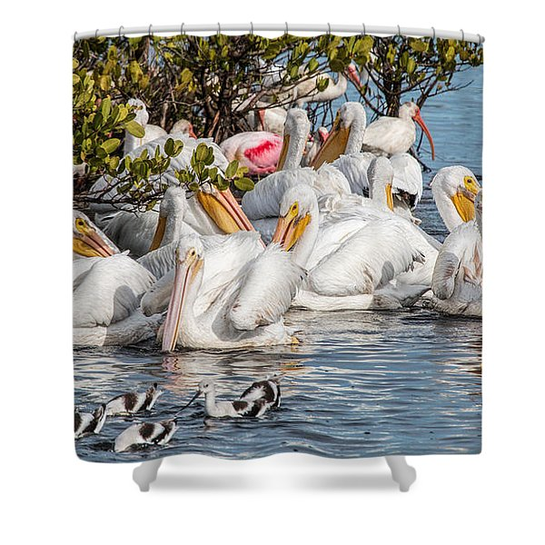 White Pelicans And Others Shower Curtain