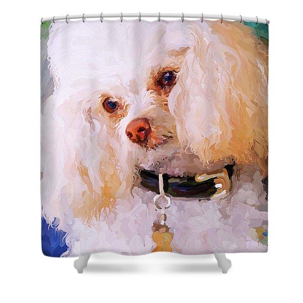 White Poodle Shower Curtain by Jai Johnson