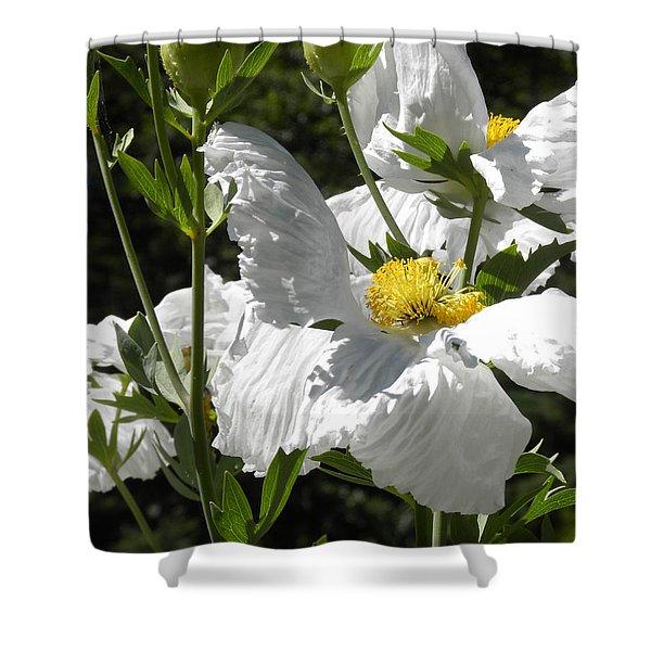 White Poppies Shower Curtain