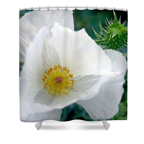 White Prickly Poppy Shower Curtain