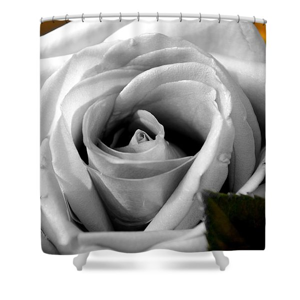 White Rose 2 Shower Curtain