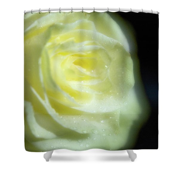 White Rose 4 Soft Shower Curtain