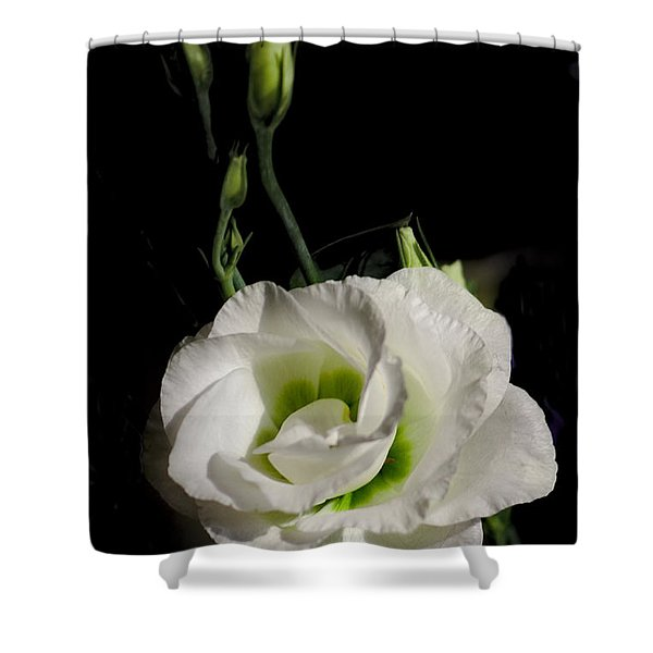 Shower Curtain featuring the photograph White Rose On Black by Jeremy Hayden