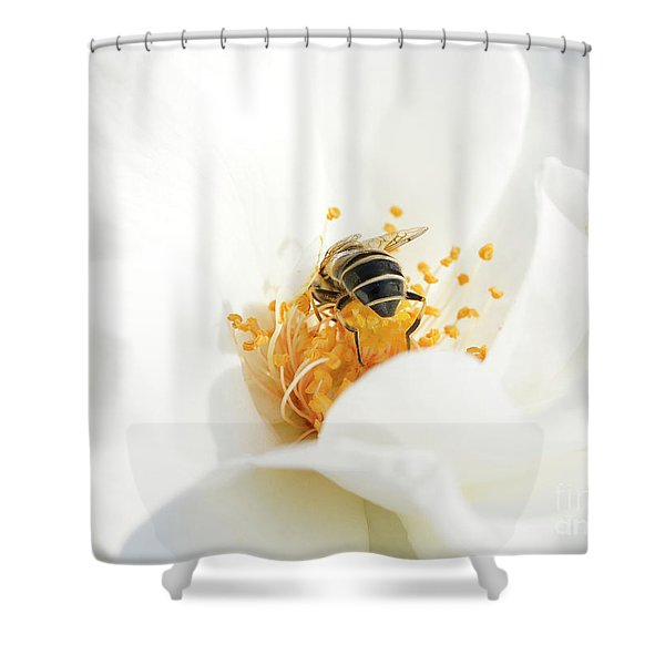 Looking For Gold In A White Rose Shower Curtain