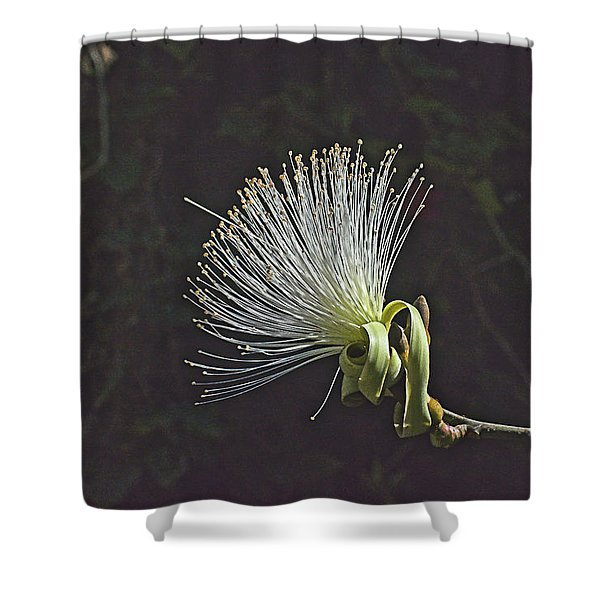White Shaving Brush Pseudobombax Flower Shower Curtain