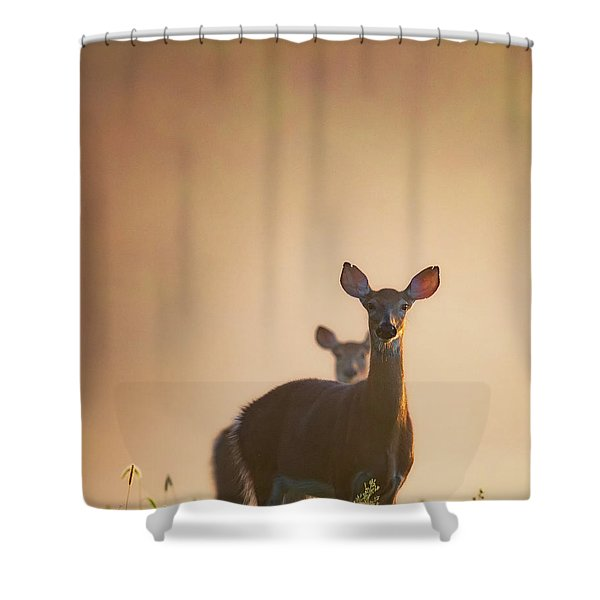 White-tailed Deer 2016 Shower Curtain