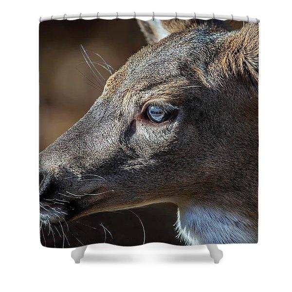White Tailed Deer Facial Profile Closeup Portrait Shower Curtain