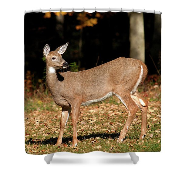 White Tailed Deer In Autumn Shower Curtain